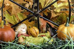 Autumn Season Stock Photos