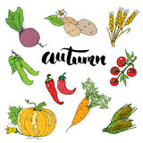 Autumn season set. Hand drawn doodles and lettering vector illustration. Stock Photography
