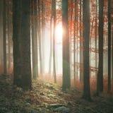 Autumn season sunny and foggy forest stock photos
