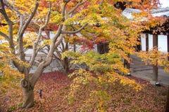 Autumn season at Tofukuji temple Stock Photography
