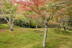 Autumn season at Tofukuji temple Royalty Free Stock Images