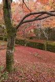 Autumn season at Tofukuji temple Royalty Free Stock Photography