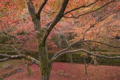 Autumn season at Tofukuji temple Stock Image