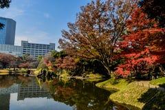 Autumn season Tokyo Koishikawa Korakuen garden red maple tree colorful park royalty free stock image