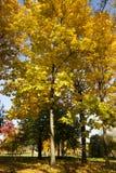 The autumn season Stock Image