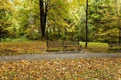 The autumn season Royalty Free Stock Image