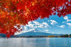Autumn Season- und Fuji-Berg am Kawaguchiko See, Japan Lizenzfreie Stockfotos