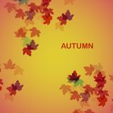 Autumn seasonal background Royalty Free Stock Images