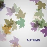 Autumn seasonal background Stock Image