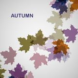 Autumn seasonal background. Eps10, vector illustration Royalty Free Stock Photo