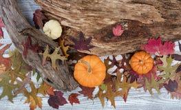 Autumn Seasonal Background rustique Images libres de droits