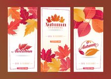 Autumn Seasonal Discount Card Set Photos libres de droits
