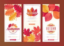 Autumn Seasonal Discount Card Set Fotografia de Stock