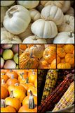 Autumn Seasonal Fruits Vegetables Image libre de droits
