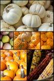 Autumn Seasonal Fruits Vegetables Royalty-vrije Stock Afbeelding