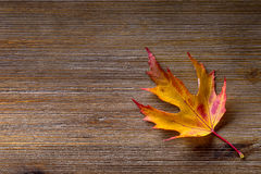Autumn. Seasonal photo. Autumn leaves loose on a wooden board. Free space for your text products and informations Royalty Free Stock Images