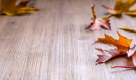 Autumn. Seasonal photo. Autumn leaves loose on a wooden board. Free space for your text products and informations.  Stock Photography