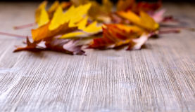 Autumn. Seasonal photo. Autumn leaves loose on a wooden board. Free space for your text products and informations.  Stock Photo