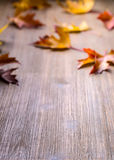 Autumn. Seasonal photo. Autumn leaves loose on a wooden board. Free space for your text products and informations.  Stock Photos