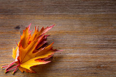 Autumn. Seasonal photo. Autumn leaves loose on a wooden board. Free space for your text products and informations Stock Photos