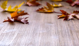 Autumn. Seasonal photo. Autumn leaves loose on a wooden board. Free space for your text products and informations.  Royalty Free Stock Photos