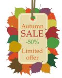 Autumn seasonal sale, beige price tag hanging from rope with text autumn sale 50 discount and limited offer, framed. Colorful fallen leaves, maple, birch and vector illustration