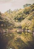 Autumn seasonal Tree in Jeju Do , Korea. Stock Images