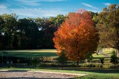 Autumn Seasons hermoso, cielo azul, frío y brisa al aire libre Fotografía de archivo