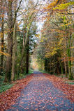 Autumn seasons in the park Royalty Free Stock Photography