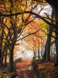 Autumn Secret Pathway royaltyfri foto