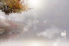 Autumn See mit Schwan Lizenzfreie Stockfotos