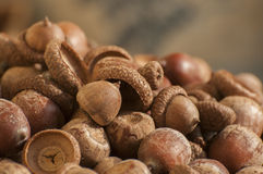 Autumn seeds. Play an important role in forest ecology Stock Photo
