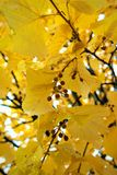 Autumn Seeds et feuilles Photographie stock