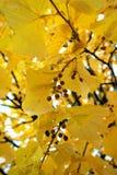 Autumn Seeds y hojas Fotografía de archivo