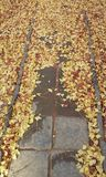 Autumn Seoul Lizenzfreie Stockfotografie