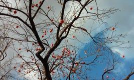 Autumn Seoul Stockfoto
