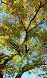 Autumn Seoul Stockfotografie
