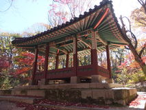 Autumn Seoul royalty free stock photo