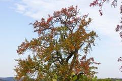 Autumn September Indian-de zomerkleuren van bladeren en bomen op B royalty-vrije stock foto