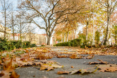 Autumn in Serbia Stock Images