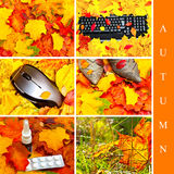 Autumn set Stock Image