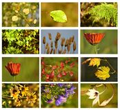 Autumn set. A autumn set whit leafs and flowers Stock Images