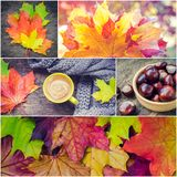 Autumn set, collage from photos. Colorful and bright background with fallen autumn leaves. Warm knitted scarf and cup of coffee on rustic wooden table with Stock Photo