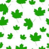 Autumn Set delle foglie di acero verdi su fondo bianco, versione di vettore Fotografie Stock Libere da Diritti