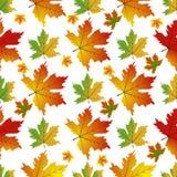 Autumn Set des feuilles oranges d'érable Images libres de droits
