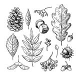 Autumn  set with leaves, berries, fir cones, nuts Royalty Free Stock Photography