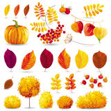 Autumn set. Autumn leaves, trees, bushes, berries and flowers set for seasonal events and sales Royalty Free Stock Photo