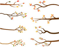 Autumn set of tree branch silhouettes Stock Photos