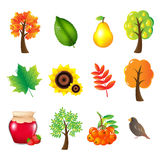 Autumn Set. Vector Stock Photography