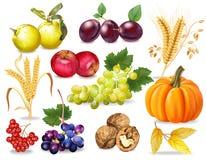 Autumn set Vector realistic. Pumpkin, wheat, grapes, wine, walnuts, grapes. Detailed 3d design. dark backgrounds. Autumn set Vector realistic. Pumpkin, wheat vector illustration